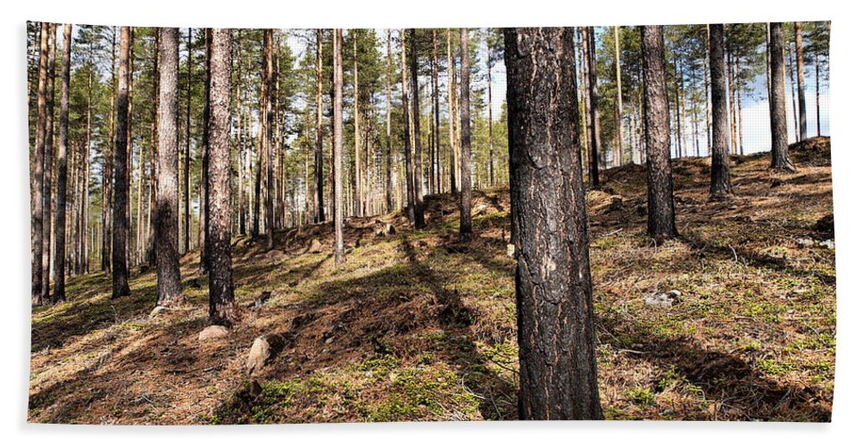 Lehtokukka Hand Towel featuring the photograph Forest Next Summer After A Fire by Jouko Lehto
