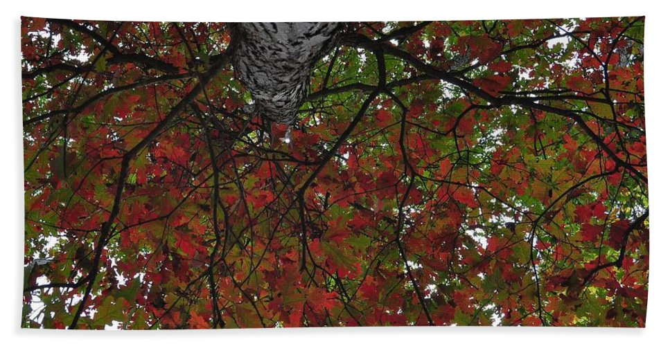 Fall Bath Sheet featuring the photograph Forest Canopy by JAMART Photography