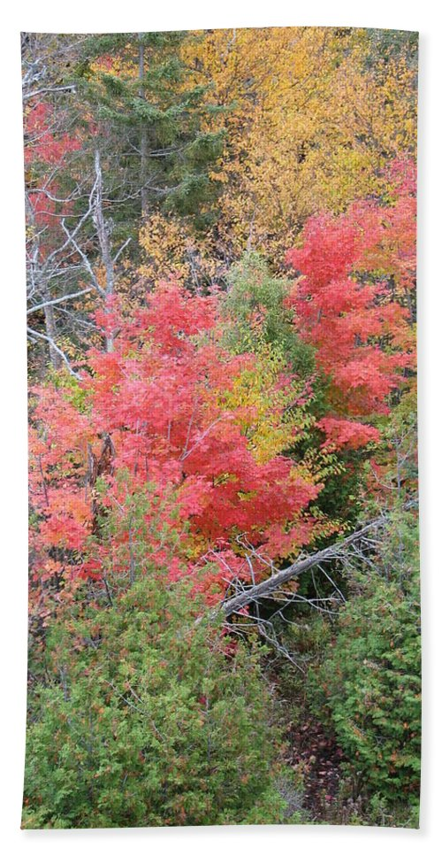 Fall Hand Towel featuring the photograph Forest Fire by Kelly Mezzapelle