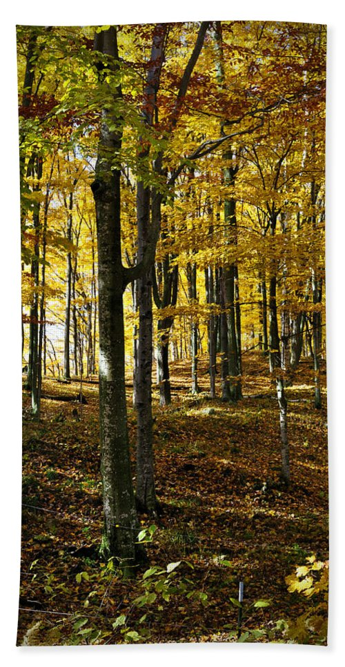 Trees Hand Towel featuring the photograph Forest Floor One by Tim Nyberg