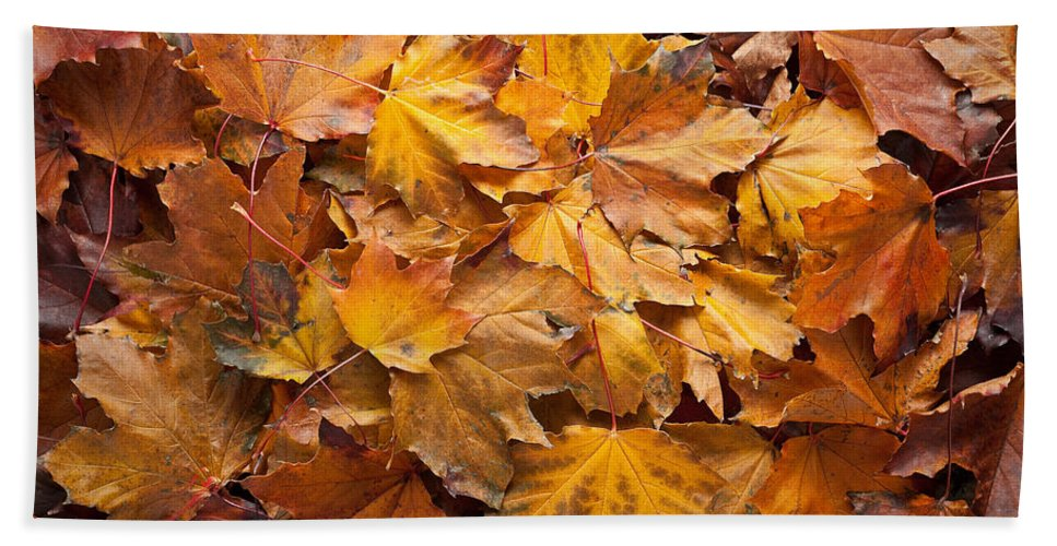 Maple Hand Towel featuring the photograph Forest Floor by Steve Gadomski