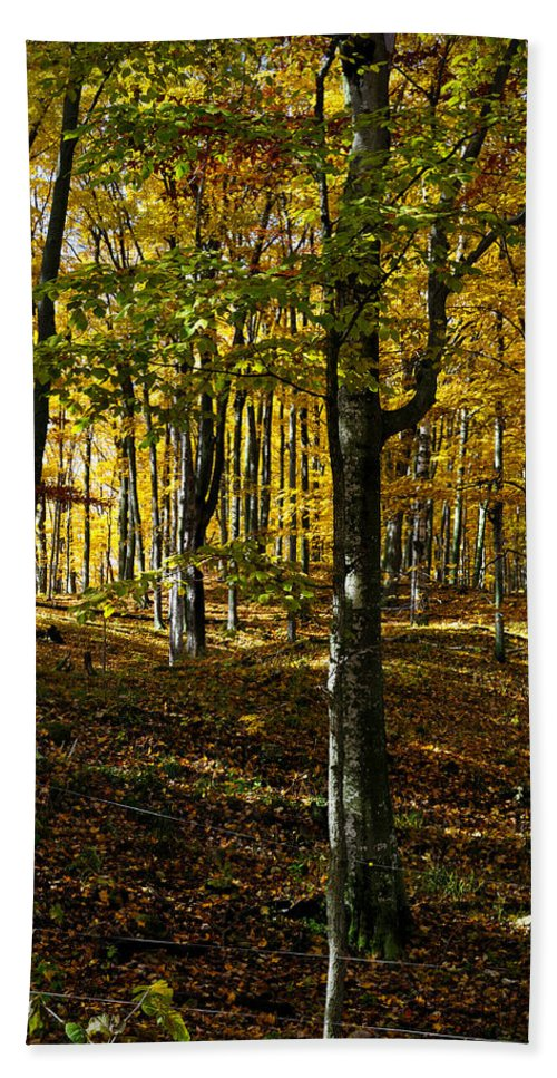 Autumn Bath Sheet featuring the photograph Forest Floor Two by Tim Nyberg