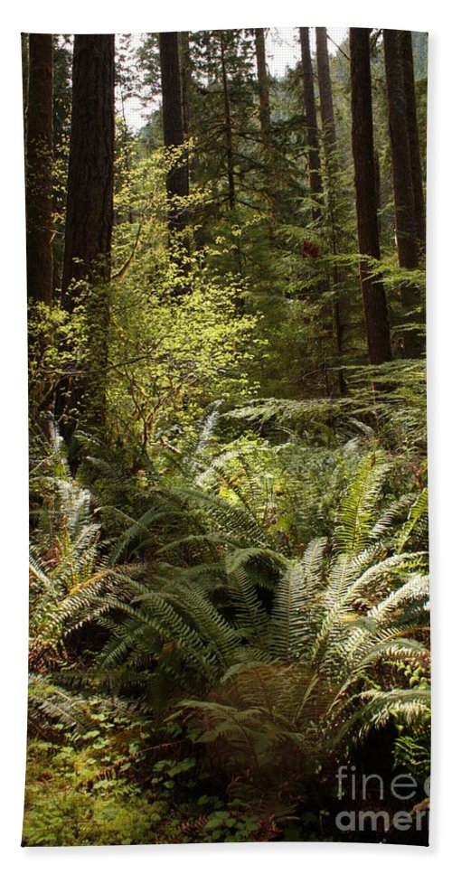 Northwest Bath Sheet featuring the photograph Forest Sunlight And Shadows by Carol Groenen