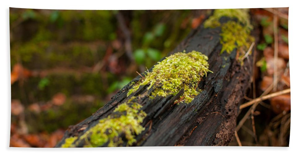 Winterpacht Bath Sheet featuring the photograph Forest Woods by Miguel Winterpacht