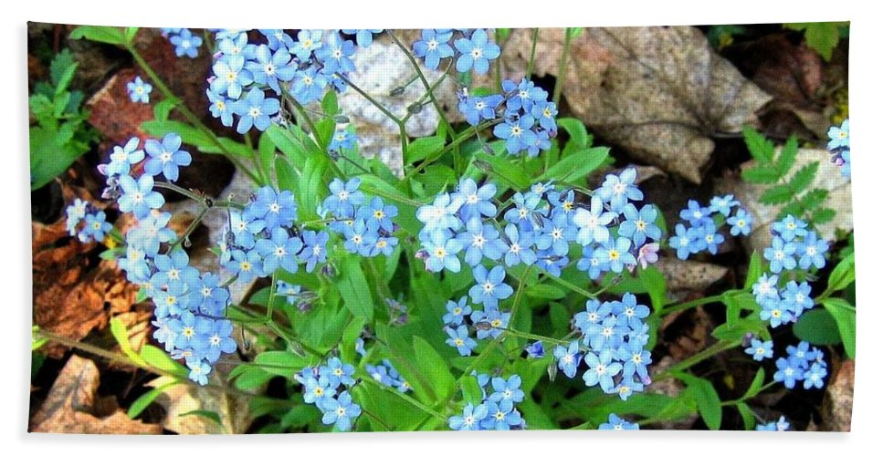 Forget-me-not Bath Sheet featuring the photograph Forget-me-not by Will Borden