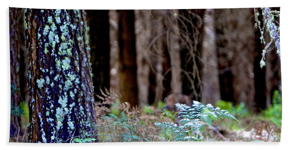 Forrest Hand Towel featuring the photograph Forrest by Michelle Ngaire