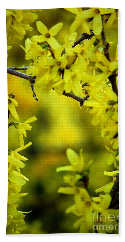 Spring Hand Towel featuring the photograph Forsythia At The Hacienda by David Lane