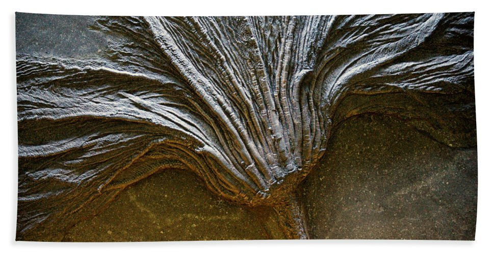 Usa Bath Towel featuring the photograph Fossil Broom by LeeAnn McLaneGoetz McLaneGoetzStudioLLCcom