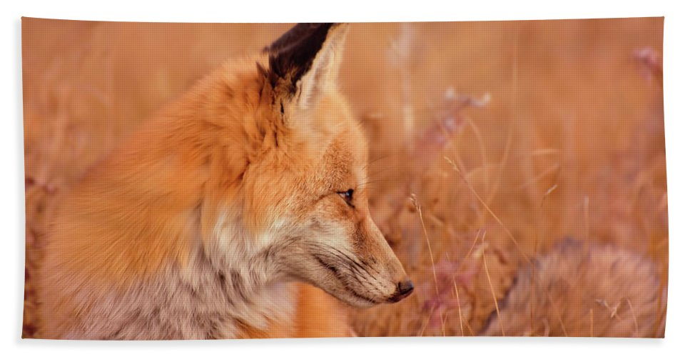 Found Bath Sheet featuring the photograph Found Fox by Fbmovercrafts