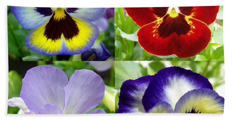 Pansy Bath Sheet featuring the photograph Four Pansies by Nancy Mueller