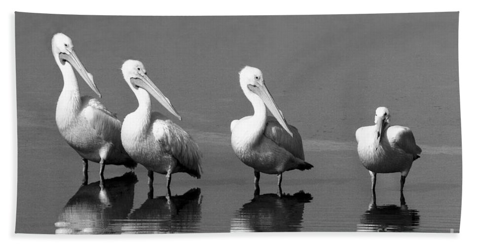 Pelican Bath Sheet featuring the photograph Four White Pelicans In A Funny Pose by John Harmon