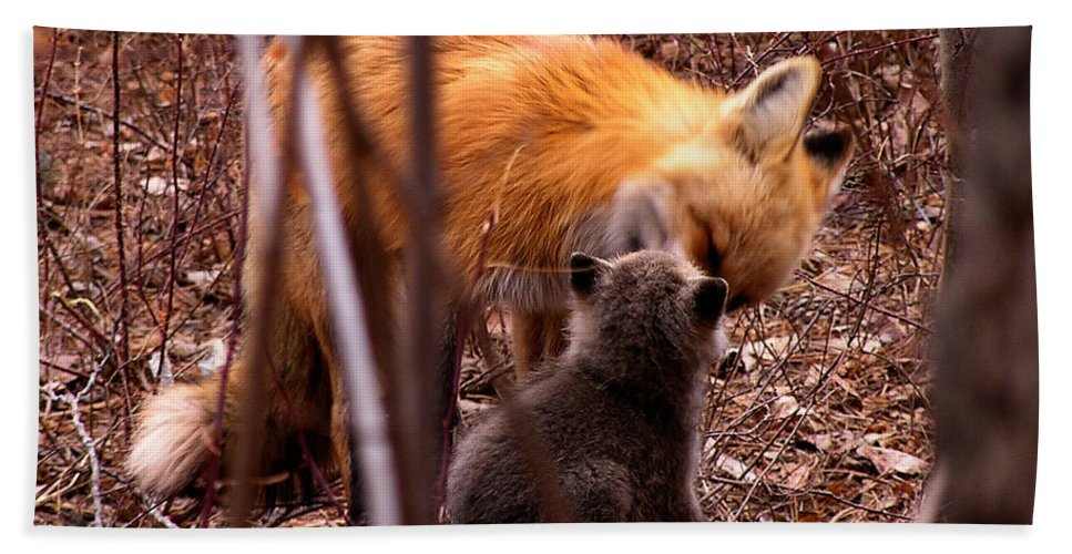 Fox Hand Towel featuring the photograph Fox by Carol Milisen