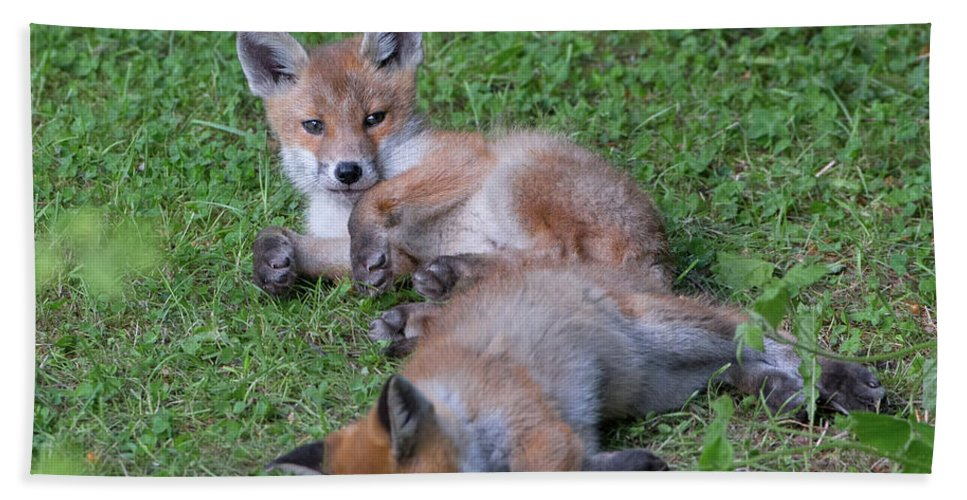 Fox Bath Sheet featuring the photograph Fox Cubs Chilling Out by Peter Walkden