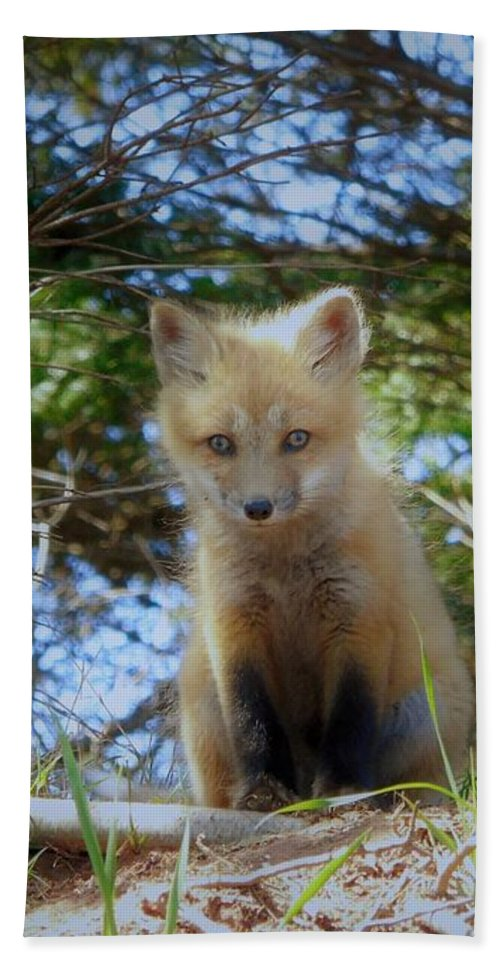Red Fox Bath Sheet featuring the photograph Fox Pup112 by Tracy Bell