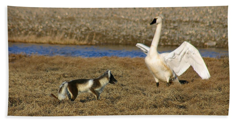 Fox Bath Towel featuring the photograph Fox Vs Swan by Anthony Jones