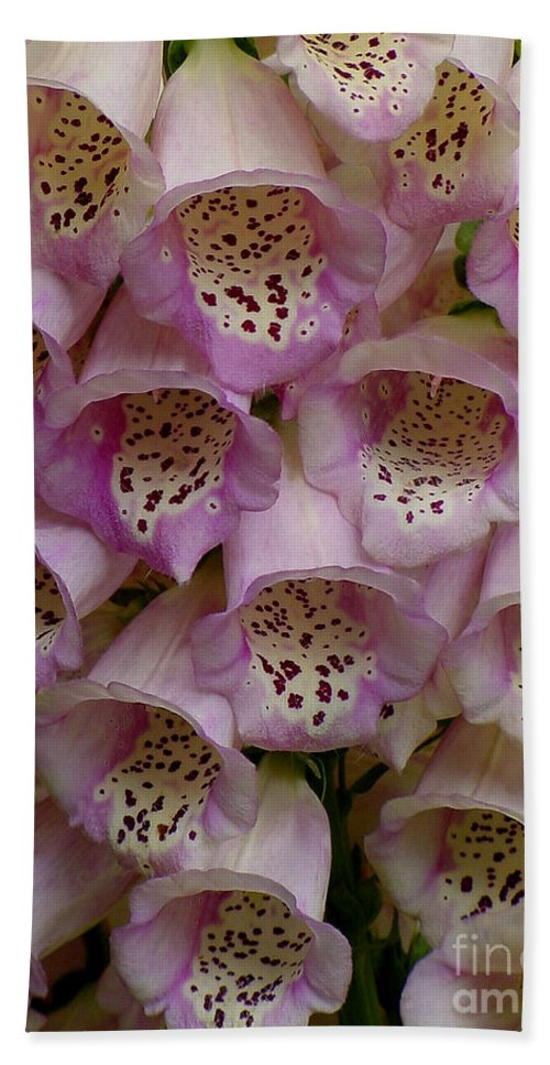Flower Hand Towel featuring the photograph Foxglove Upclose by Shirley Heyn