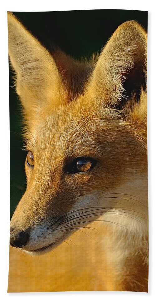 Fox Hand Towel featuring the photograph Foxy Lady by William Jobes