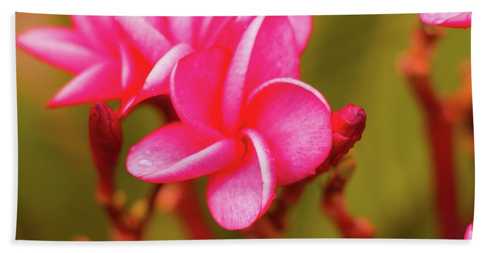 Isolated Hand Towel featuring the photograph Pink Frangipani Plumeria Flowers by Oleg Ver