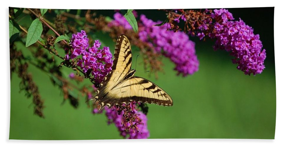Butterfly Hand Towel featuring the photograph Freedom by Debbi Granruth