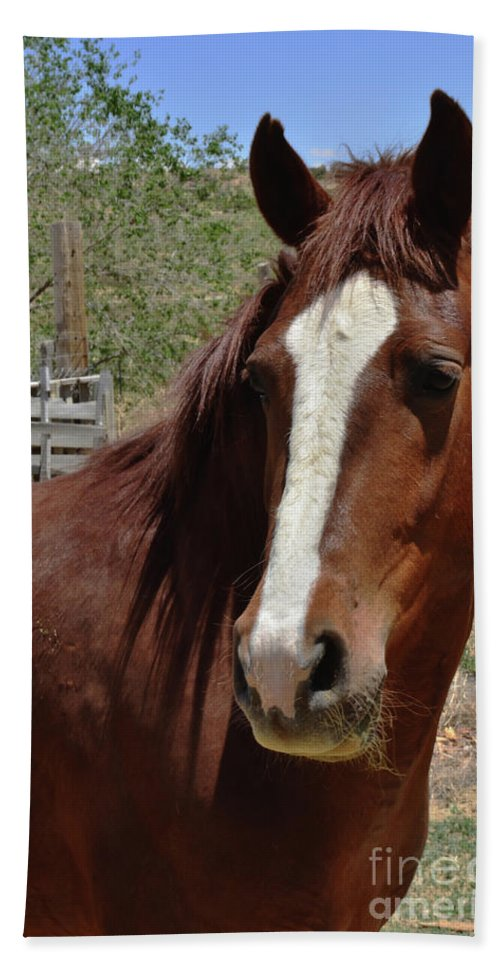Horse Bath Sheet featuring the photograph Freedom Horse by Debby Pueschel