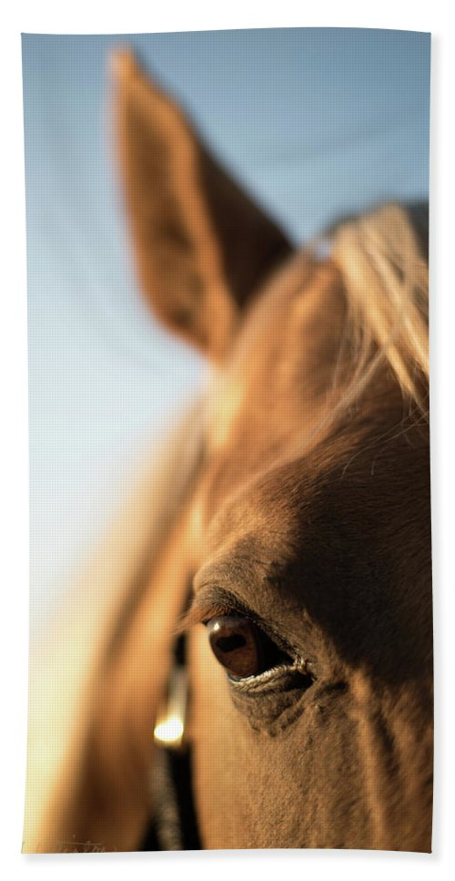 Horse Bath Sheet featuring the photograph French Cut Framed by Vicki Winton