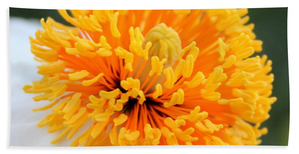 Orange Hand Towel featuring the photograph Frenzy Of Stamens by Matthew Wilson