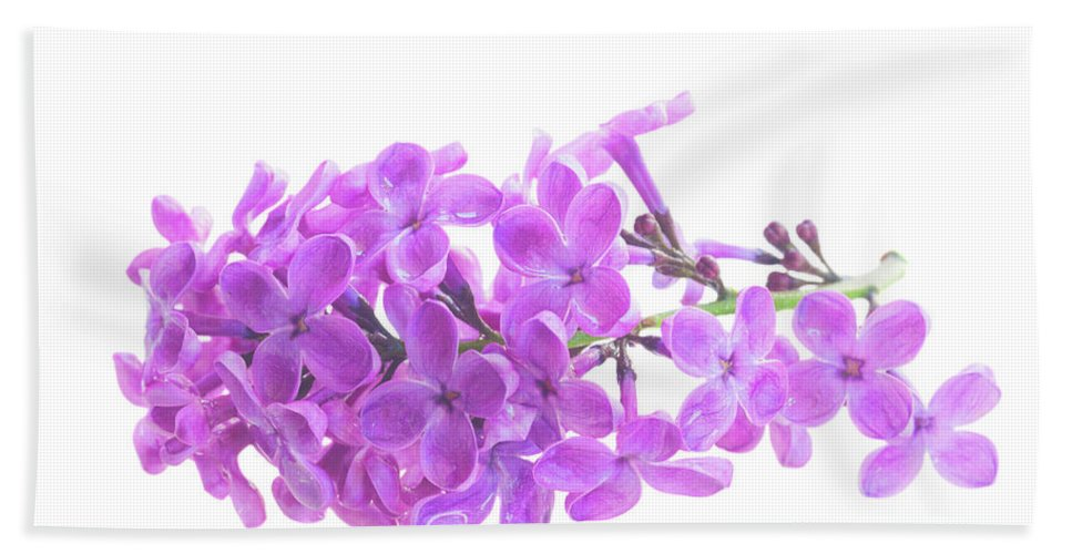 Lilac Hand Towel featuring the photograph Fresh Lilac by Anastasy Yarmolovich