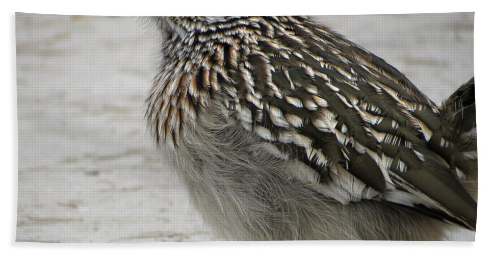 Roadrunner Hand Towel featuring the photograph Friendly Roadrunner by Laurel Powell
