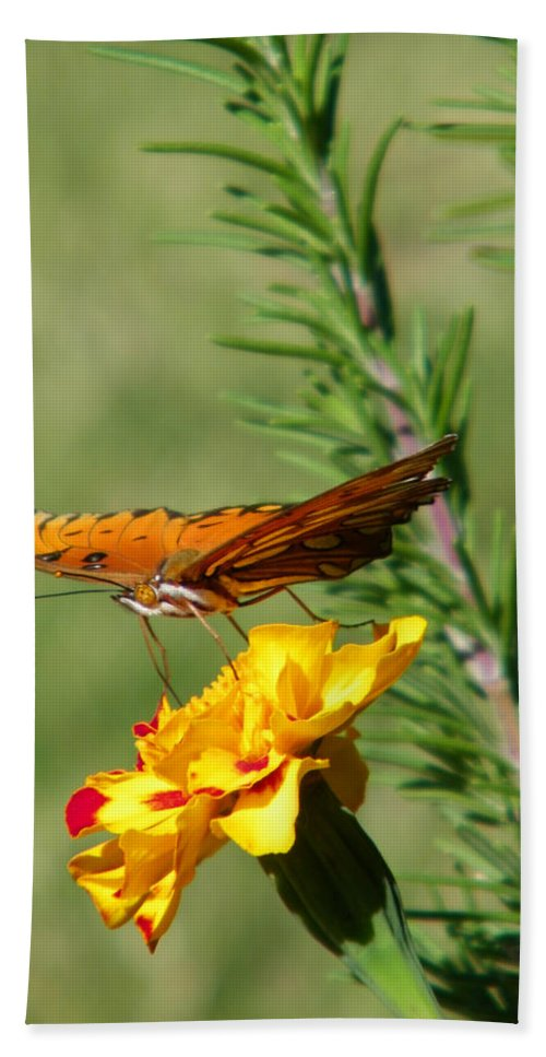 Fritillary Hand Towel featuring the photograph Fritillary Flitterby by Gale Cochran-Smith