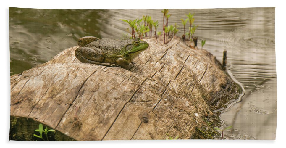 Wildlife Bath Sheet featuring the photograph Frog 1 by John Wood