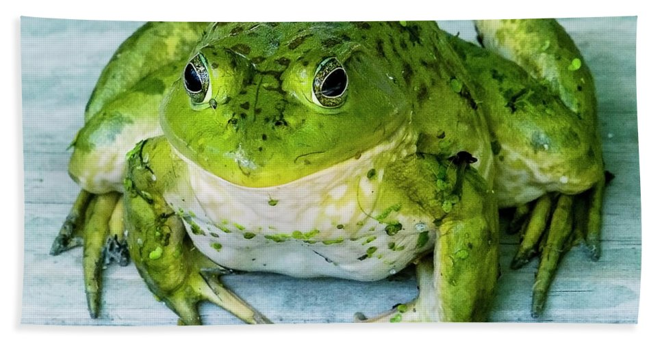 Frog Bath Sheet featuring the photograph Frog Portrait by Edward Peterson