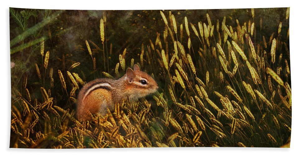 Sue Capuano Hand Towel featuring the photograph Frolic by Susan Capuano