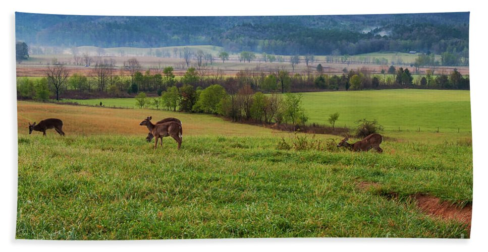 Cades Cove Bath Sheet featuring the photograph Frolicking On A Spring Morning by Bob Phillips
