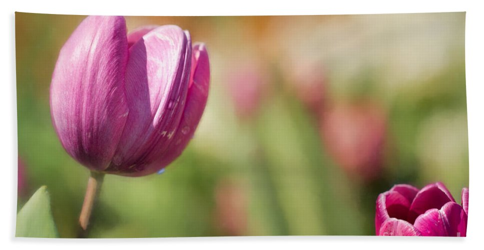 Tulips Hand Towel featuring the photograph From Across A Crowded Room by Marilyn Cornwell