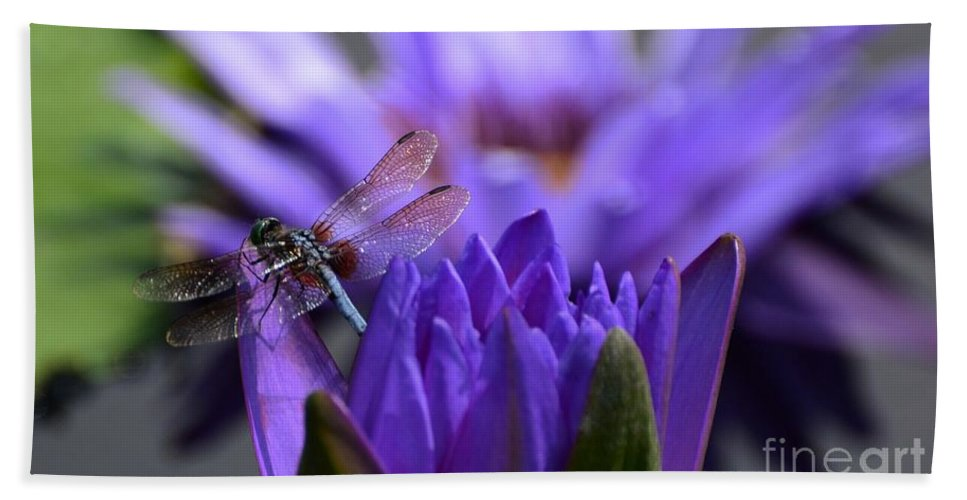 Water Lily Hand Towel featuring the photograph From The Water Lily Garden by Cindy Manero