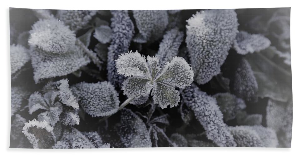 Plant Bath Sheet featuring the photograph Frost On Leaves 1 by Venus Speedwell