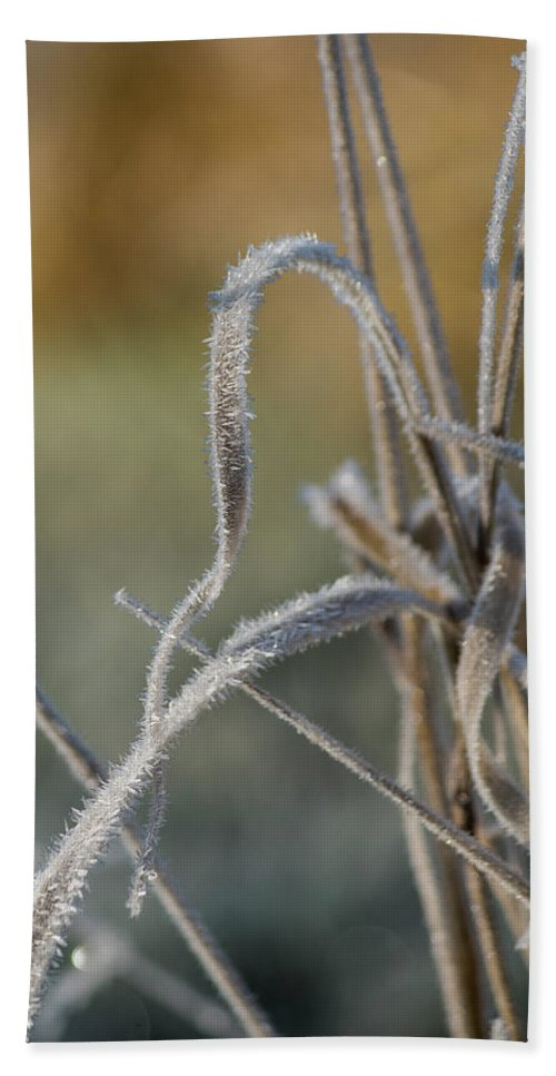 Astoria Bath Sheet featuring the photograph Frost On The Stems by Robert Potts