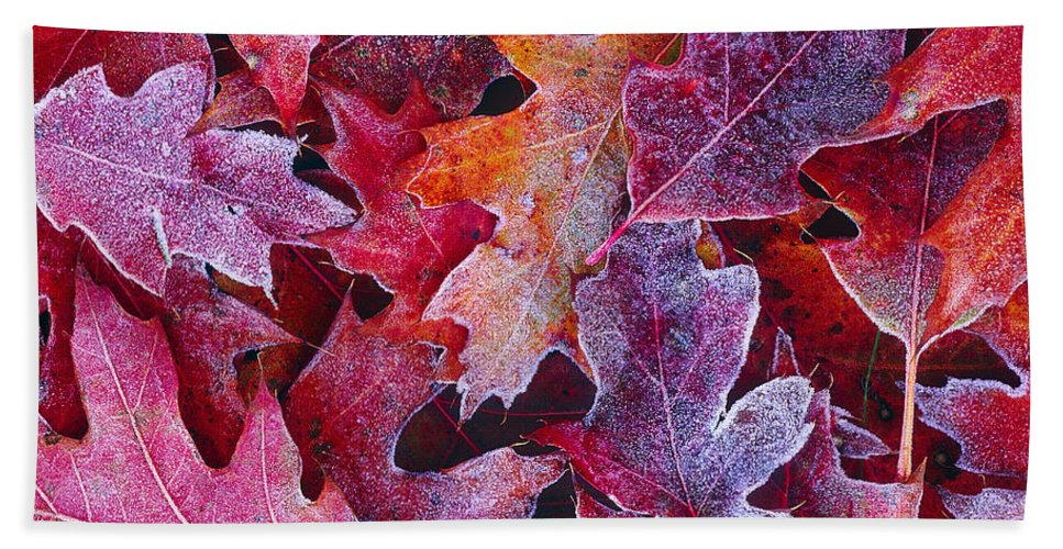 Red Oak Hand Towel featuring the photograph Frosted Red Oak Leaves by Tony Beck