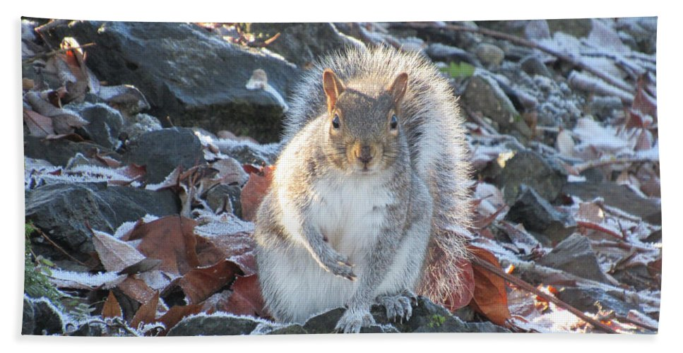 Bushy Hand Towel featuring the photograph Frosty Squirrel by Benjamin Hanna