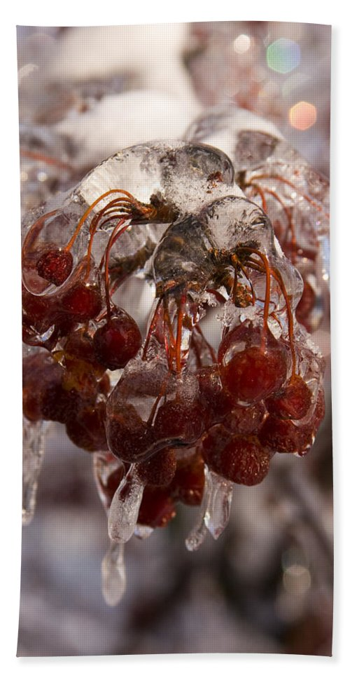 Berry Berries Red Frozen Ice Icy Snow White Spark Tree Winter Storm Glare Sun Reflection Bath Towel featuring the photograph Frozen Berries by Andrei Shliakhau