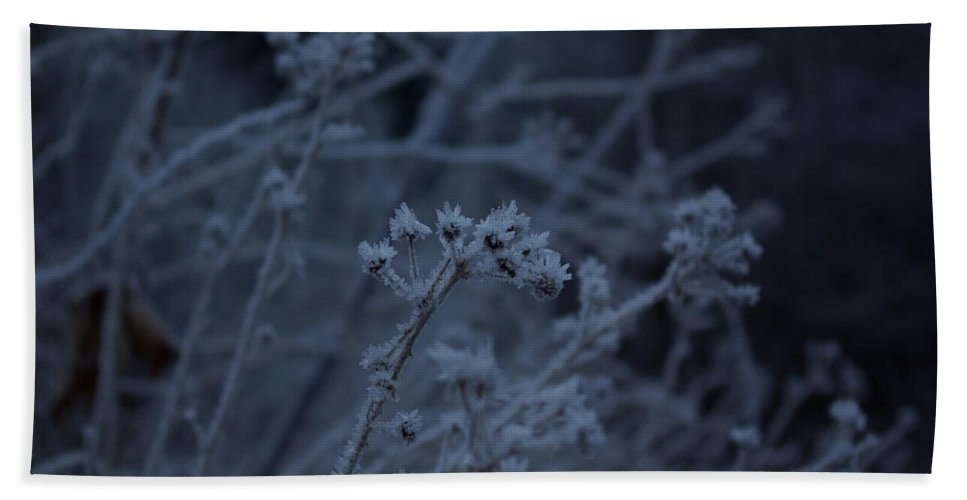 Frozen Bath Sheet featuring the photograph Frozen Buds by Cindy Johnston
