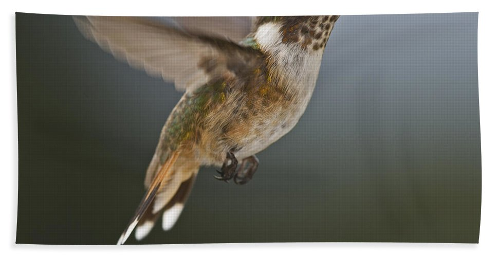 Volcano Hummingbird Hand Towel featuring the photograph Frozen In Time.. by Nina Stavlund