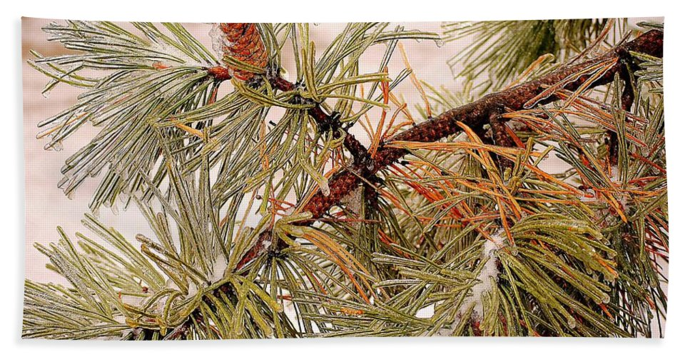 Frozen Hand Towel featuring the photograph Frozen Pine by Frozen in Time Fine Art Photography