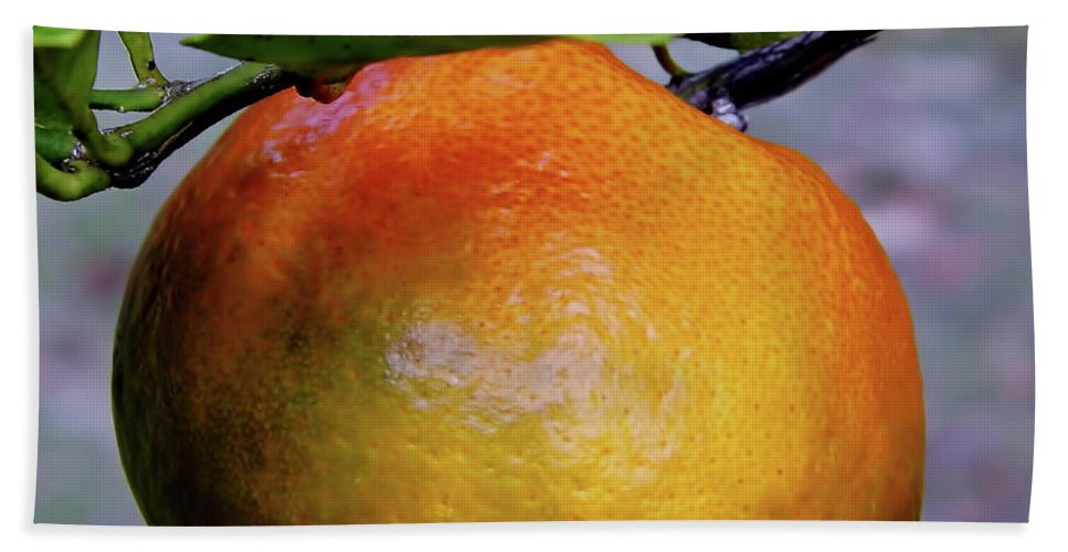 Fruit Bath Sheet featuring the photograph Fruit On The Tree by D Hackett