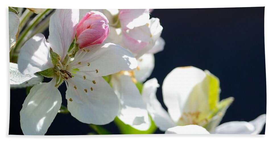 Fruit Tree Blossom Hand Towel featuring the photograph Fruit Tree Blossom by Todd Hostetter