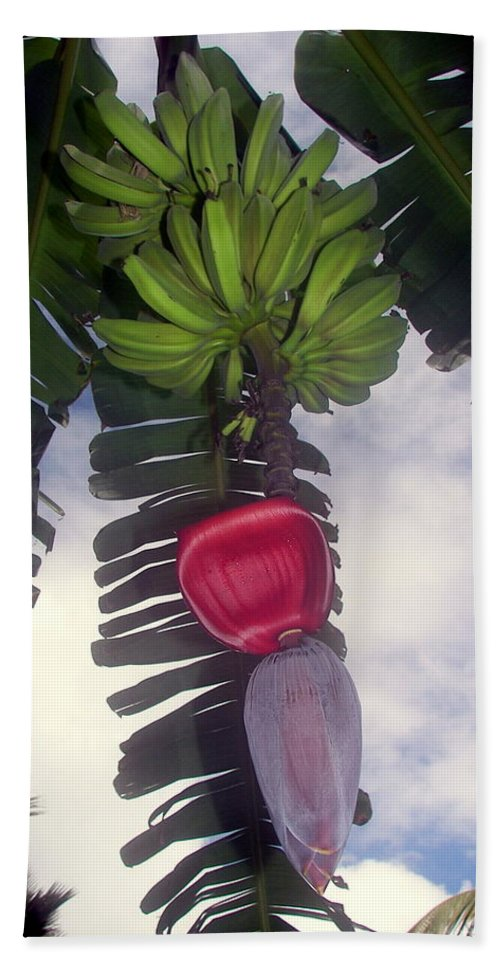 Tropical Hand Towel featuring the photograph Fruitful Beauty by Karen Wiles
