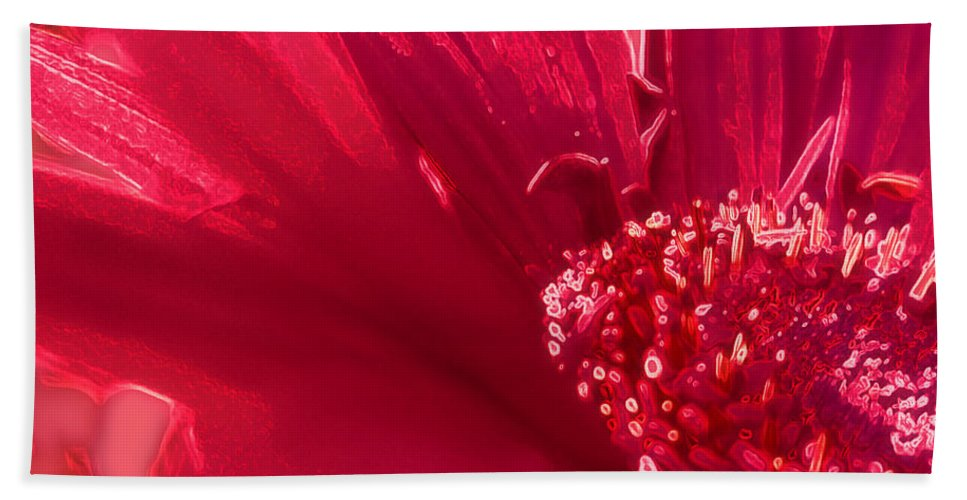 Flower Bath Sheet featuring the photograph Fuchsia Flower by Eve Penman