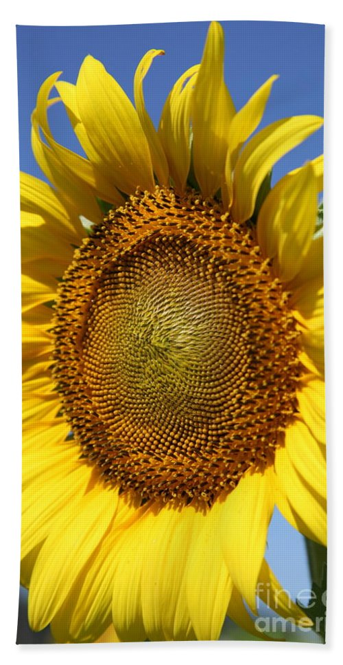 Sunflowers Bath Towel featuring the photograph Full by Amanda Barcon