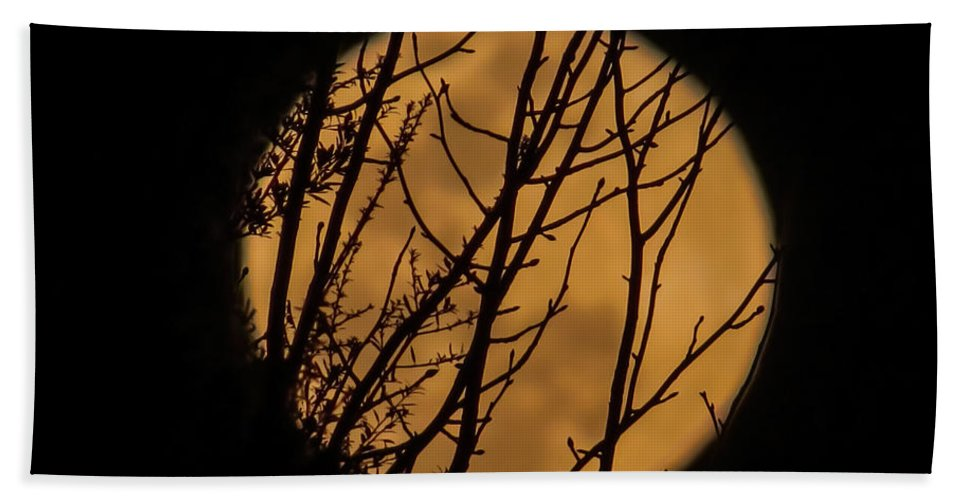 Moon Bath Sheet featuring the photograph Full Moon Through The Branches by Zina Stromberg