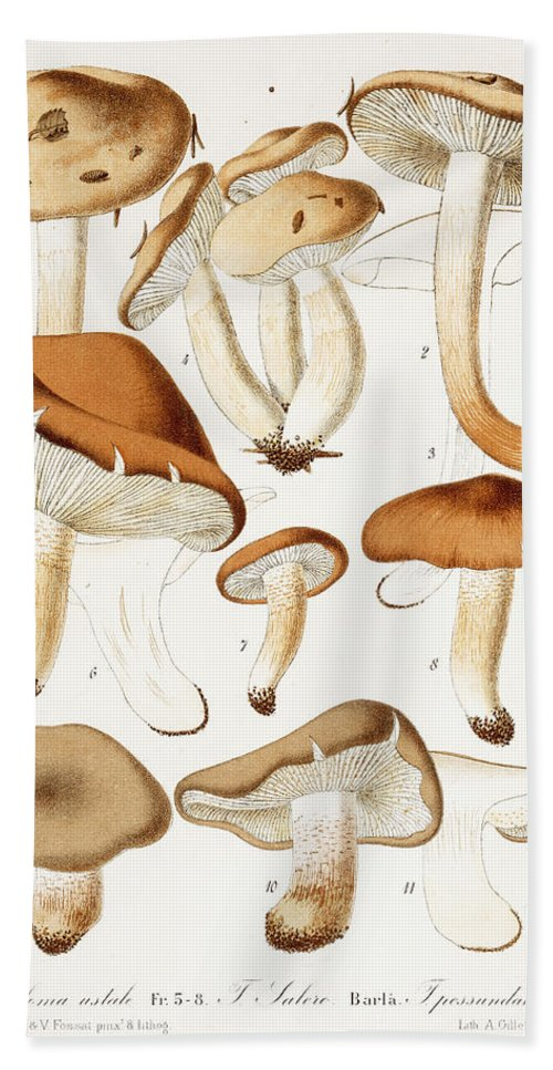 Funghi Bath Towel featuring the painting Fungi by Jean-Baptiste Barla